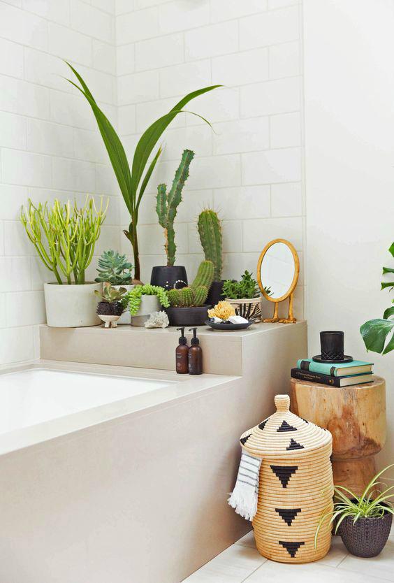 Ничто не делает ванну такой обжитой, как зеленые растения, но им нужен свет.